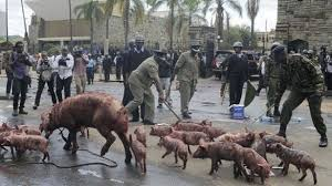 Kenyan Protesters' Use of Pigs, Vultures and Death Put Police in a Dilemma