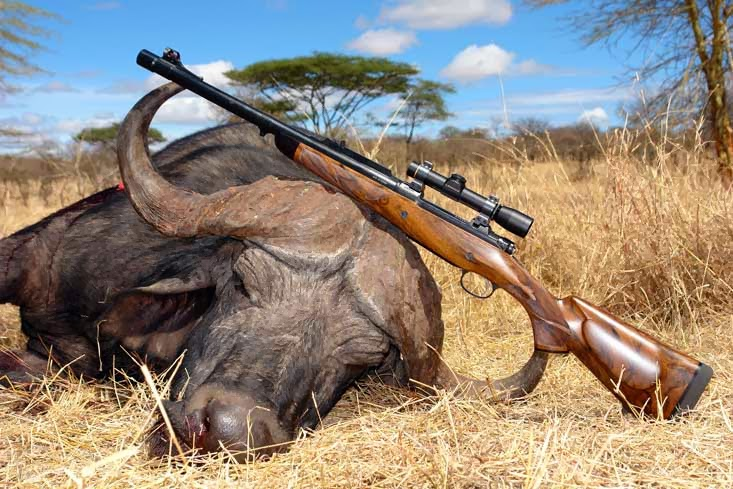 Tanzania's Trophy Hunters and Tour Operators Fight over Elephant Poaching Accusations
