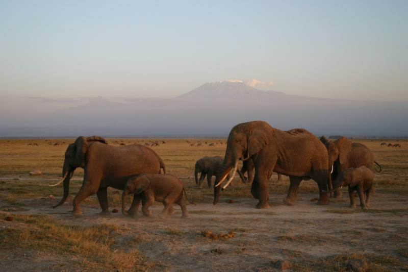 A two-night flying package to Amboseli National Park