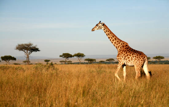 travelling Africa