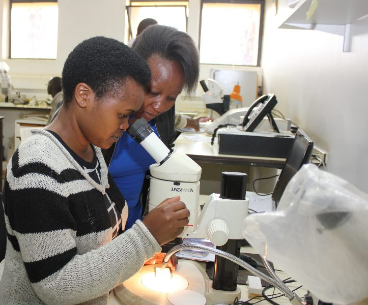 Edith Chepkorir, an ARPPIS scholar being assisted by Juliet Muriuki, a facilitator from Biosystematics Unit (BSU) at ICIPE
